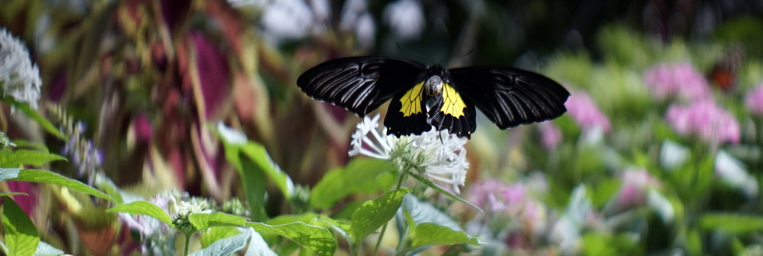 Lomo 100mm anamorphic lens | Original Butterfly House - Mackinac Island, MI. Photo by: Keith Nickoson