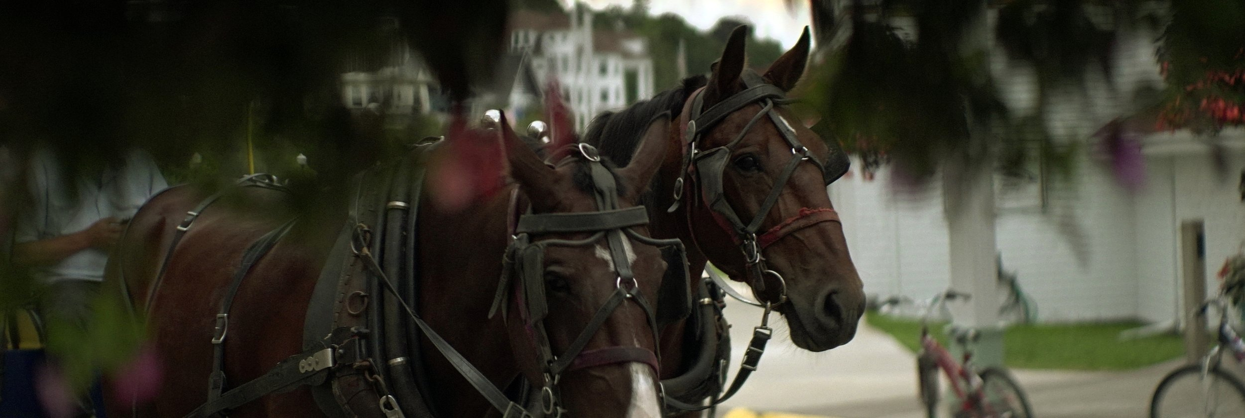 Lomo 100mm anamorphic lens | A pair of horses pulling a buggy in downtown Mackinac Island, MI - Photo by: Keith Nickoson