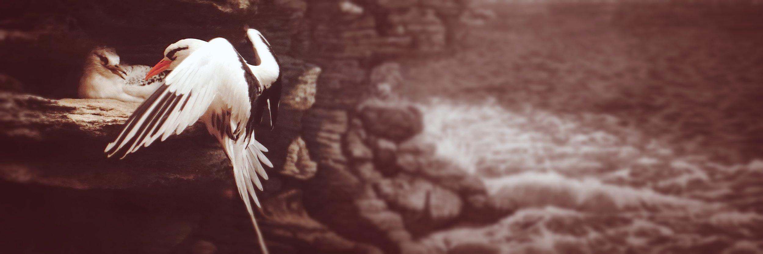 bird_cliff_bermuda_nickoson.JPG