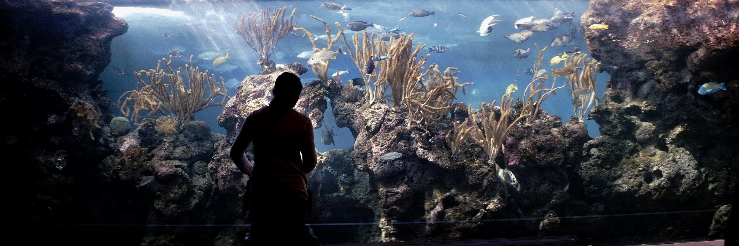 fish_tank_wall_bermuda.JPG