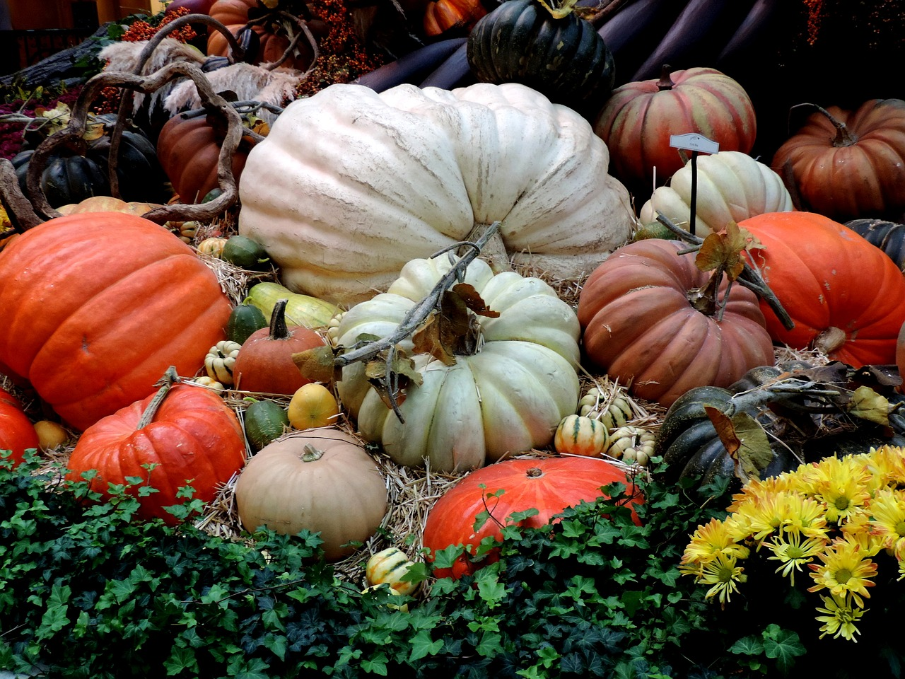 pumpkin-patch-2783707_1280.jpg
