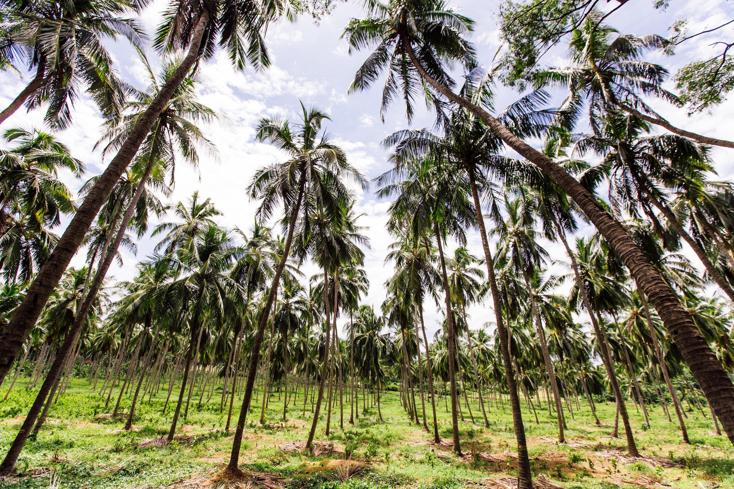 Delicious-SriLanka-PhotosCarolineMcCredie-Hi-26.jpg