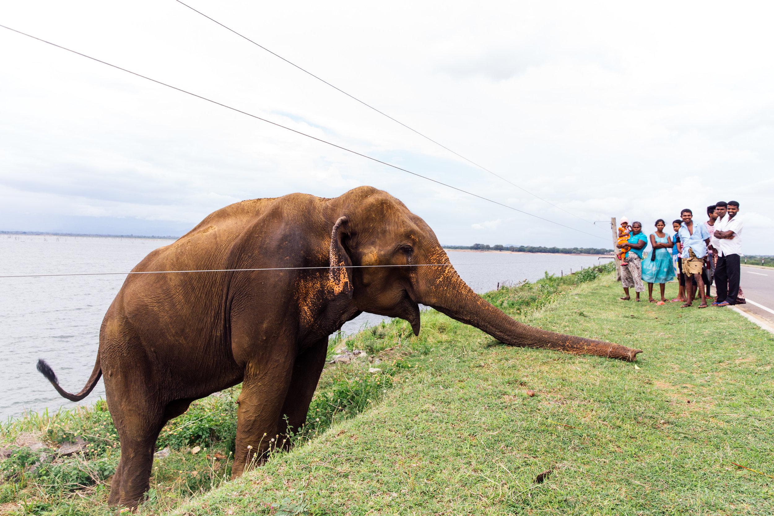 Delicious-SriLanka-PhotosCarolineMcCredie-Hi-177.jpg