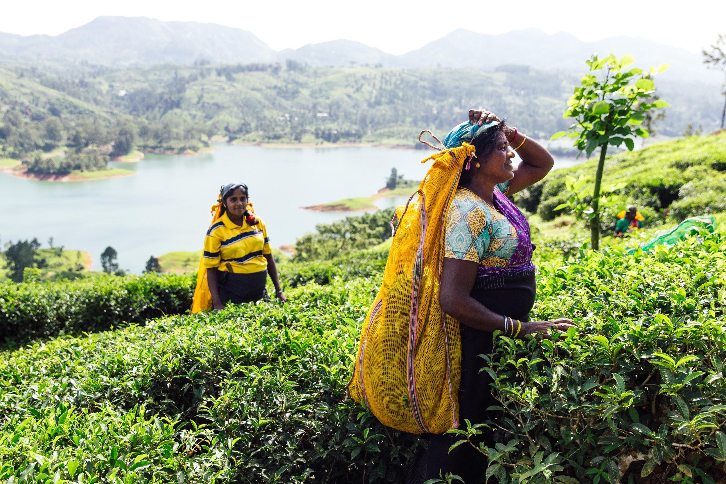 Delicious-SriLanka-PhotosCarolineMcCredie-Hi-106.jpg
