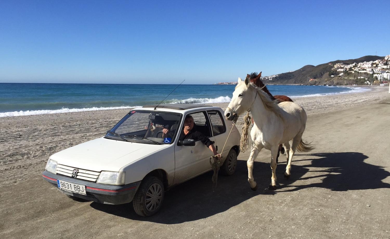 To hestar og ein bil! Skal tru kor mange hestekrefter dei utgjer til saman? Elles er dette ein praktisk måte å få dei firbeinte tilbake på beitet sitt når dei har teke seg ein tur åleine på stranda i Nerja.