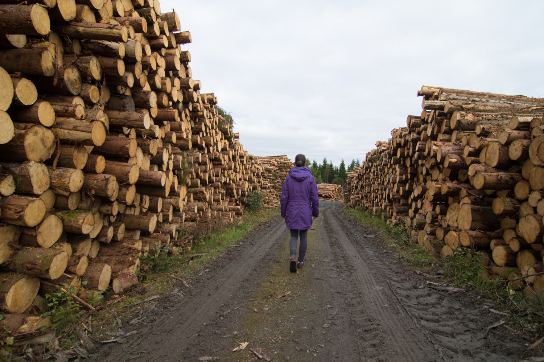 Her det teke ut mykje skog.