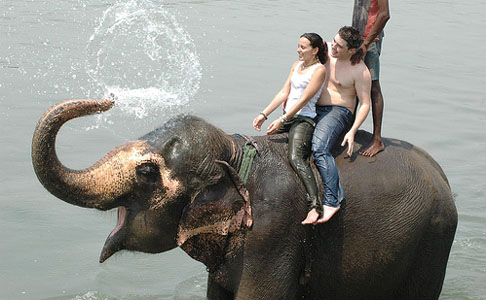 Elephant Safari at Chitwan National Park