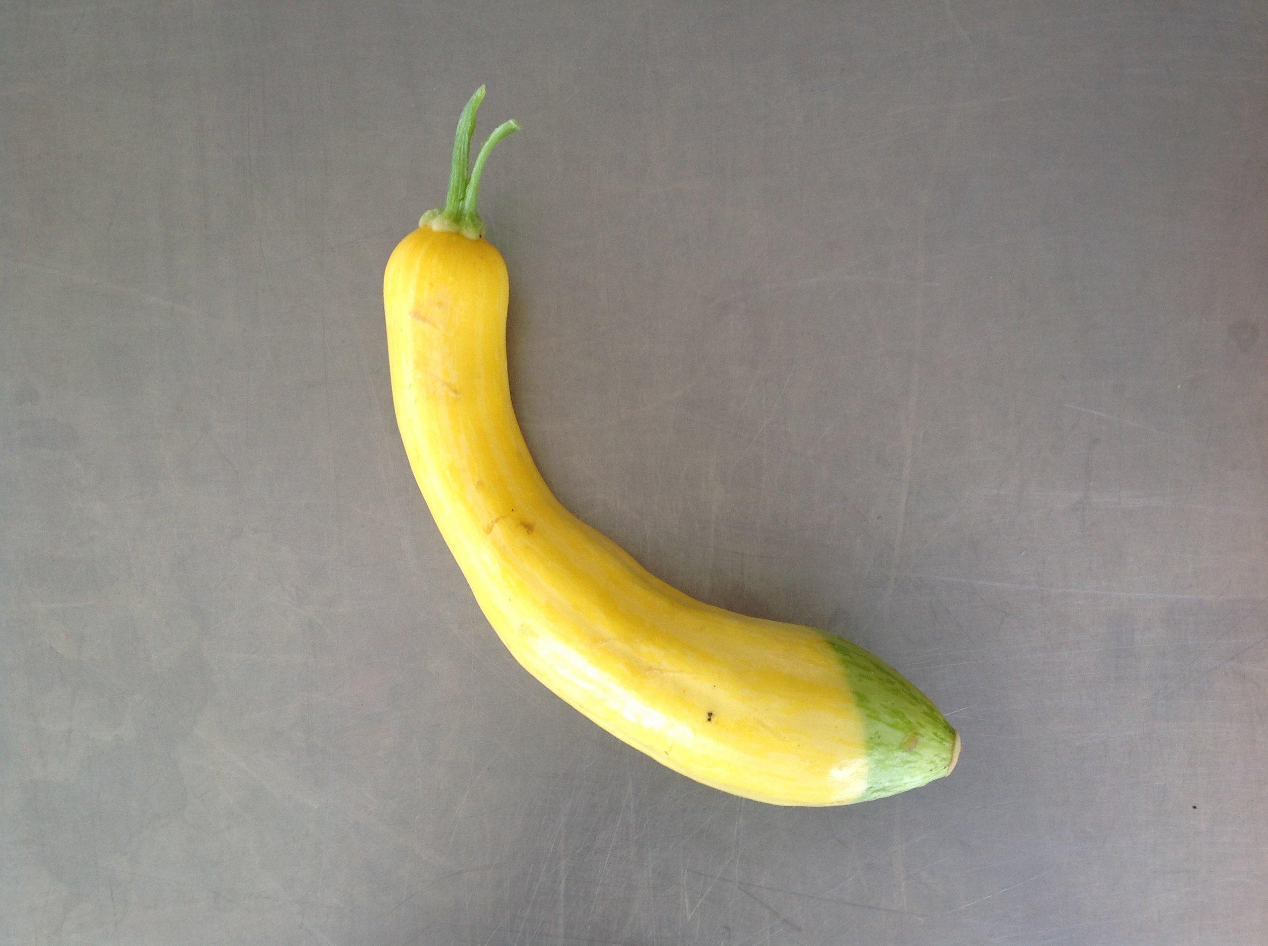 Zucchini_Zephyr.JPG