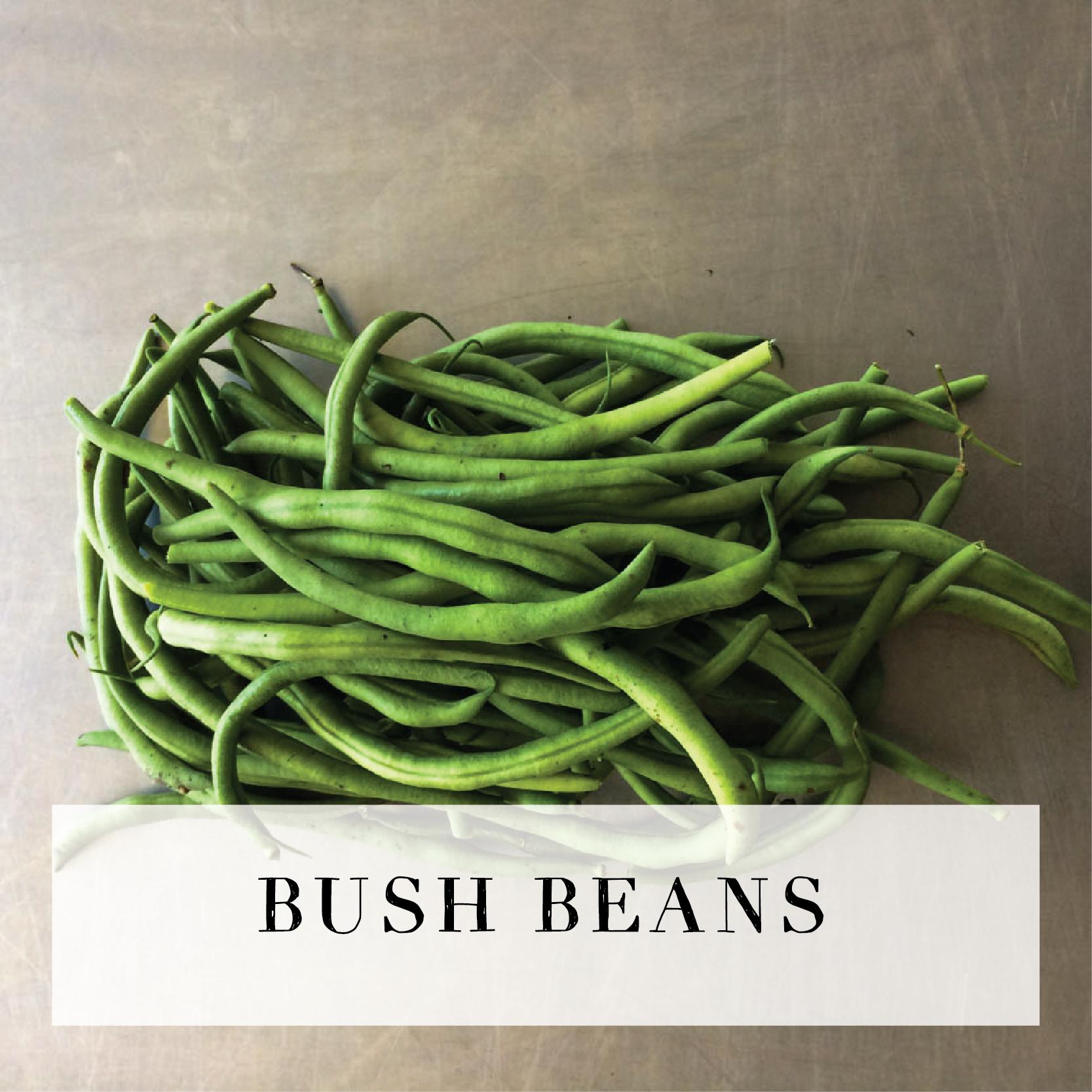 bushbeans.jpg