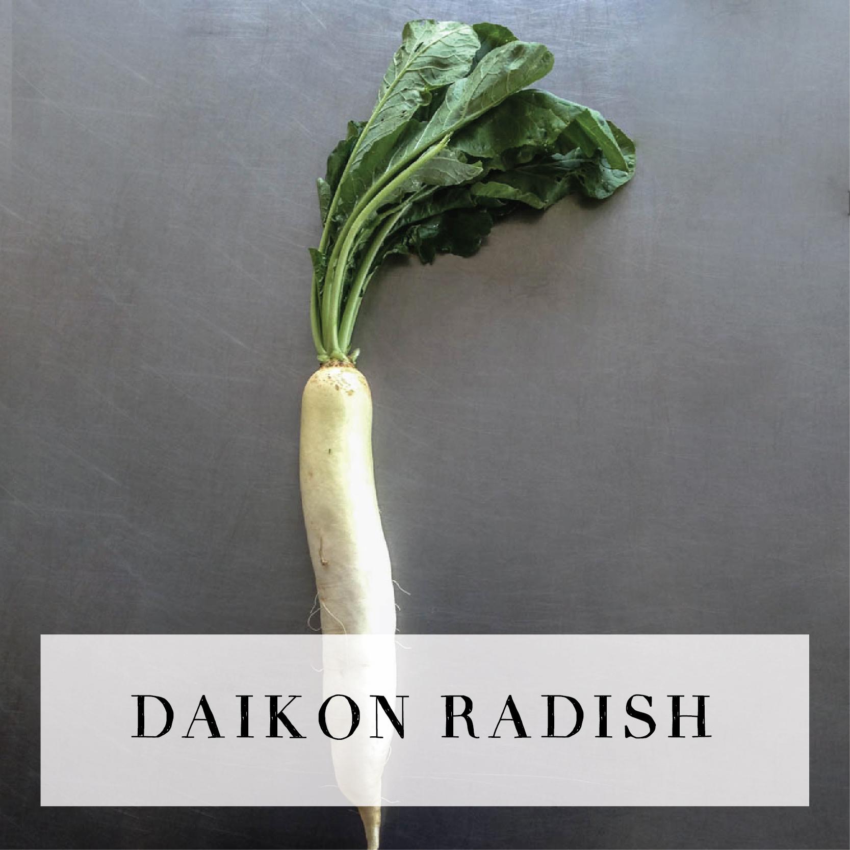 daikonradish.jpg