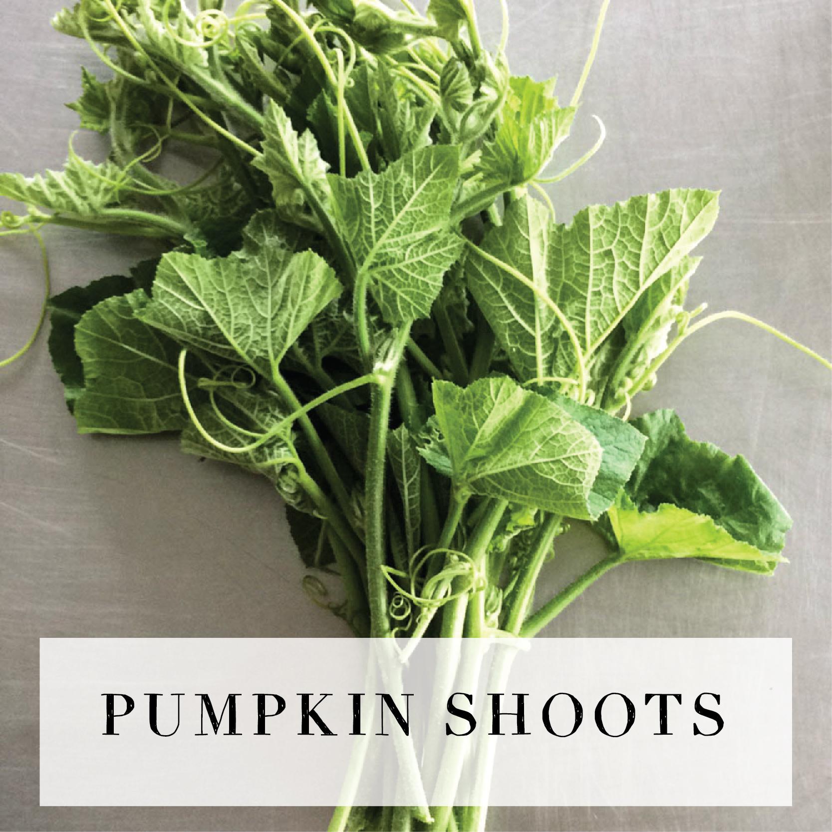 pumpkinshoots.jpg