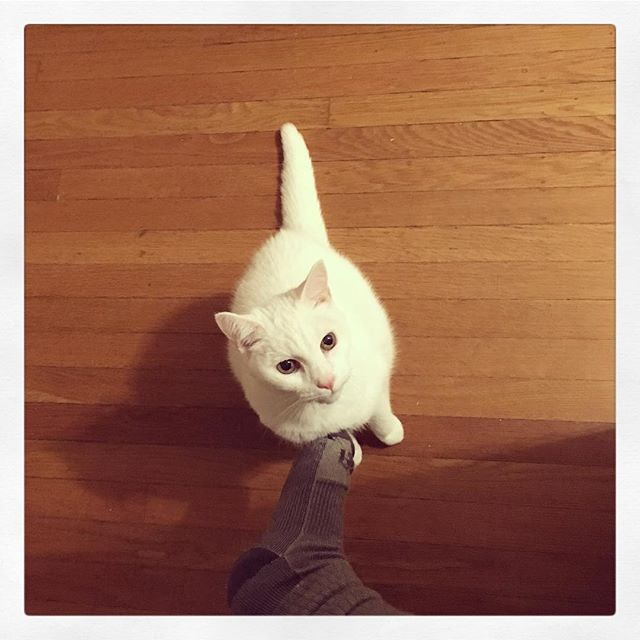 Taki wants attention and this is how I responds.  かまってーーーー かまってぇなーーーー の図。 それに足で応える横着者の私。  #catsofinstagram #newadventures #pdx