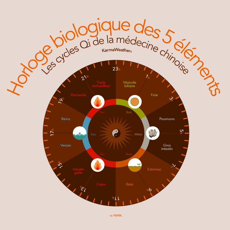 Les cycles du Qi de la médecine traditionnelle chinoise  - l'horloge biologique des cinq éléments de la cosmologie chinoise (WuXing) : Bois, Feu, Terre, Métal, Eau