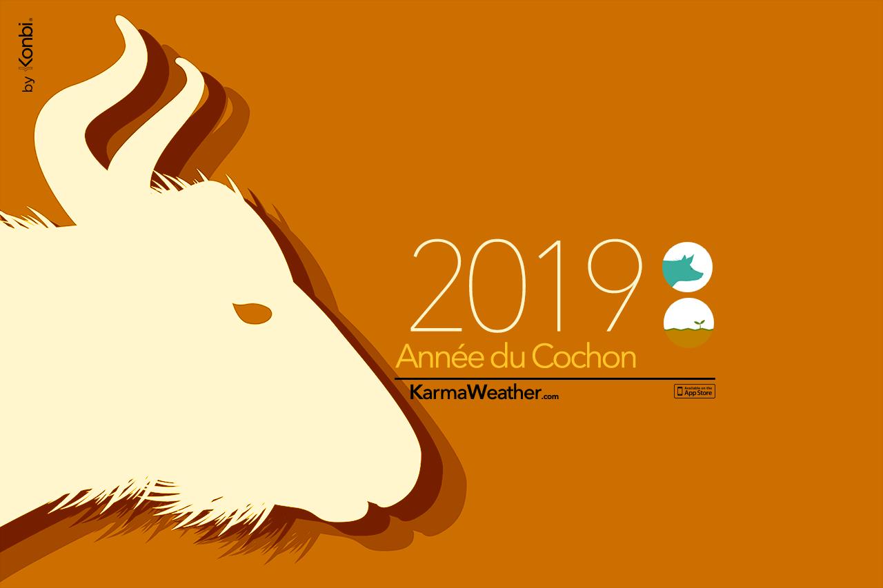 Buffle 2019