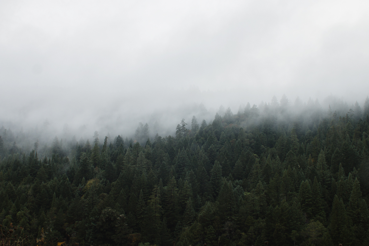 redwoods-10.jpg