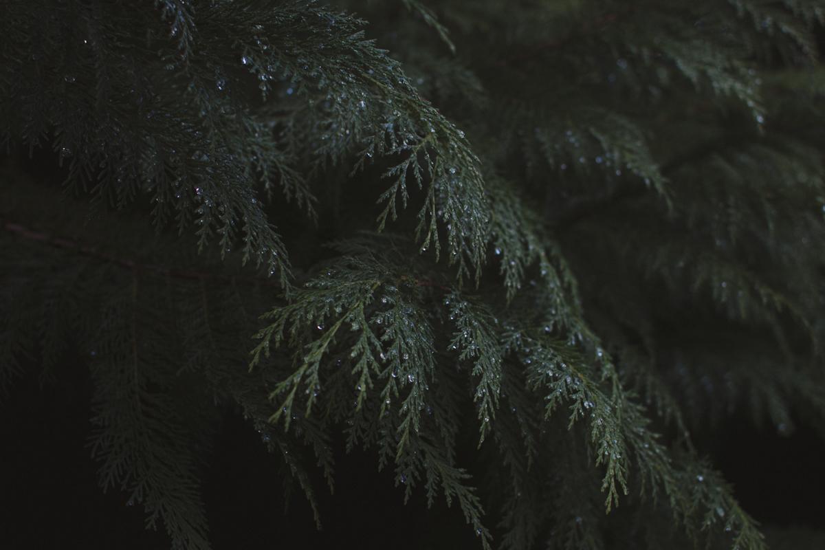 redwoods-09.jpg