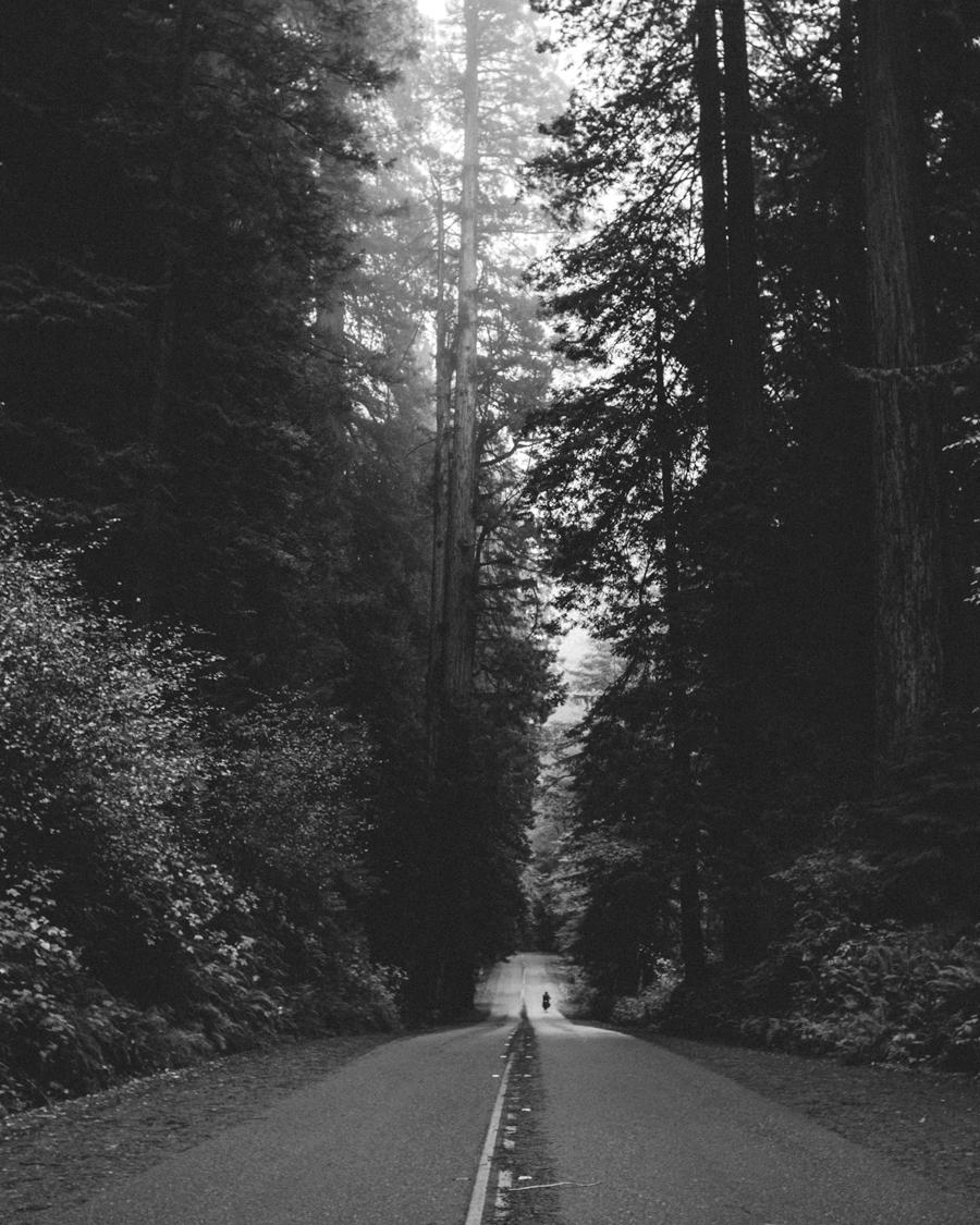 redwoods-06.jpg