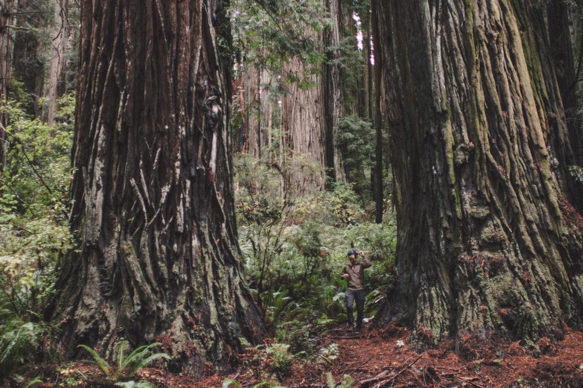 redwoods-04.jpg