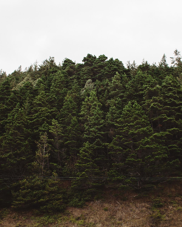 oregon-coast-06.jpg