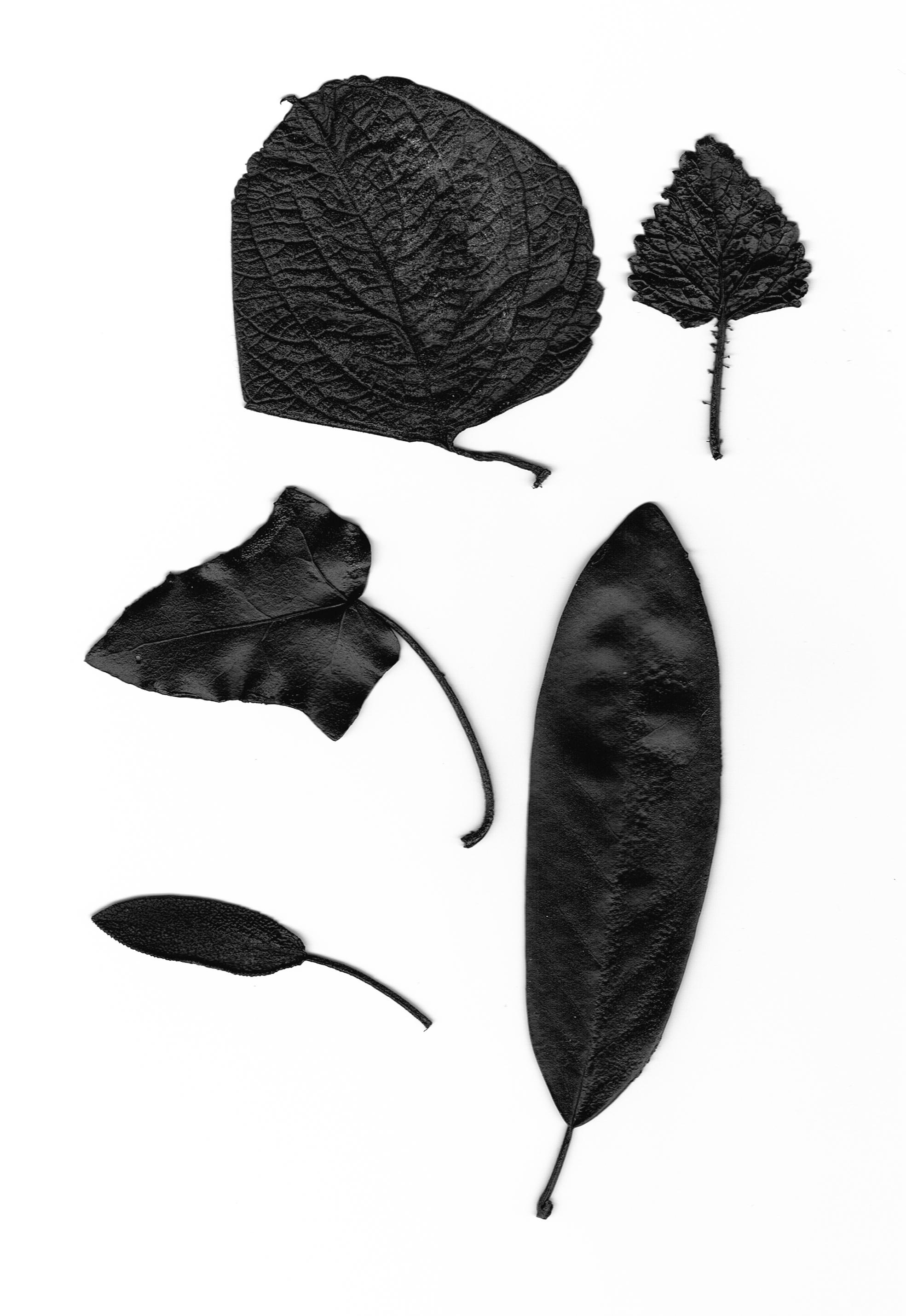 Organs  Rubber Leaves