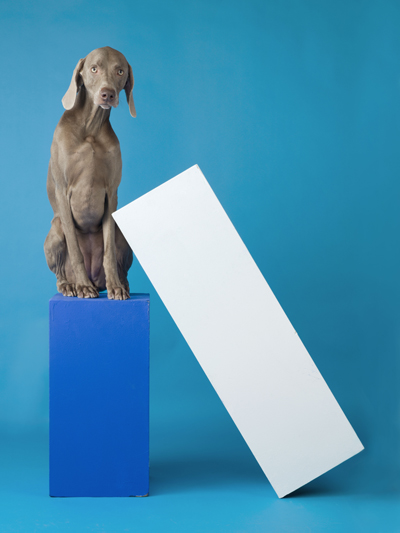 William Wegman  Lean To  2014 pigment print 44 x 34 inches edition of 7