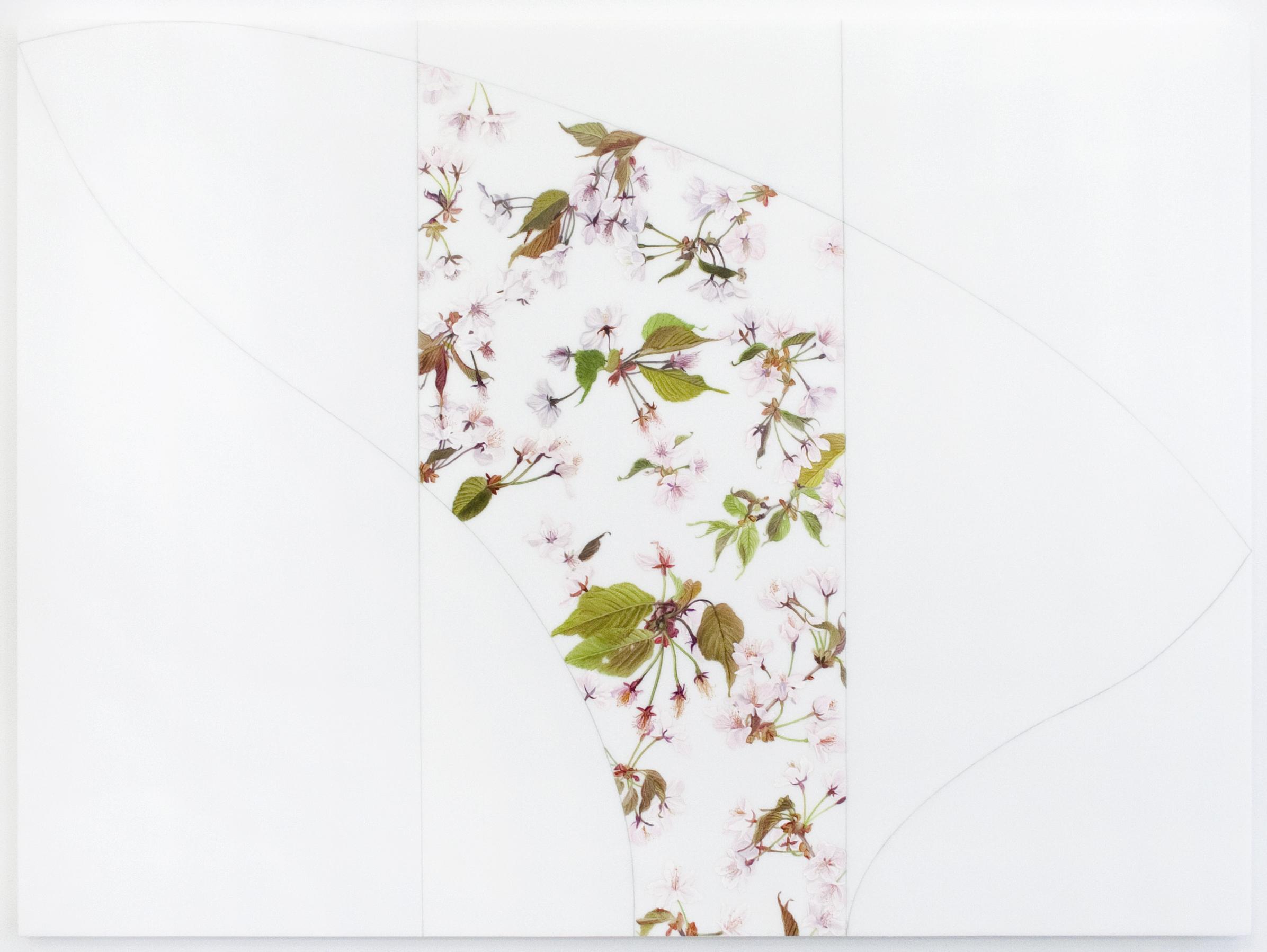 Fact & Fancy 8 (Prunus Sargentii)