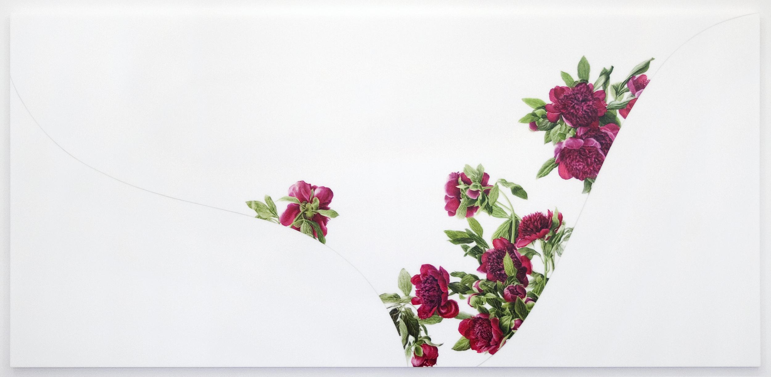 Hybrid (Paeonia)