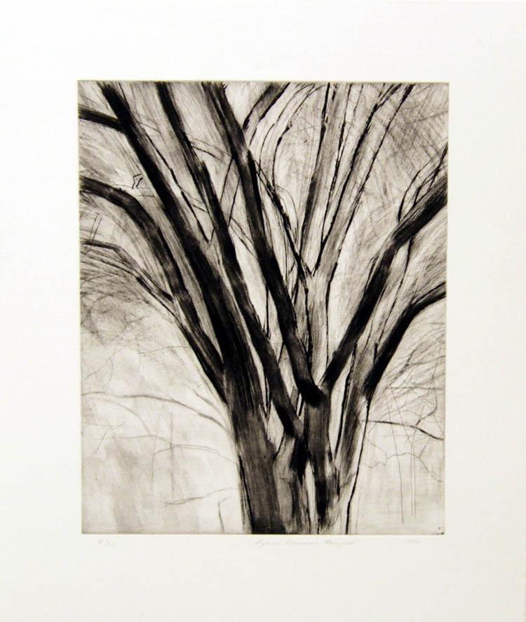 The Elm Tree (State II)