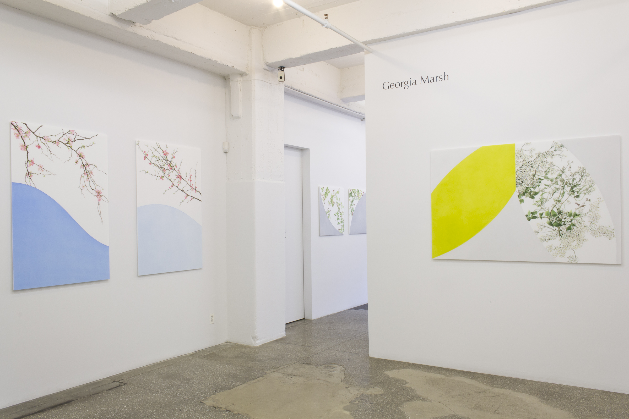 Installation View: Georgia Marsh: Arc Paintings