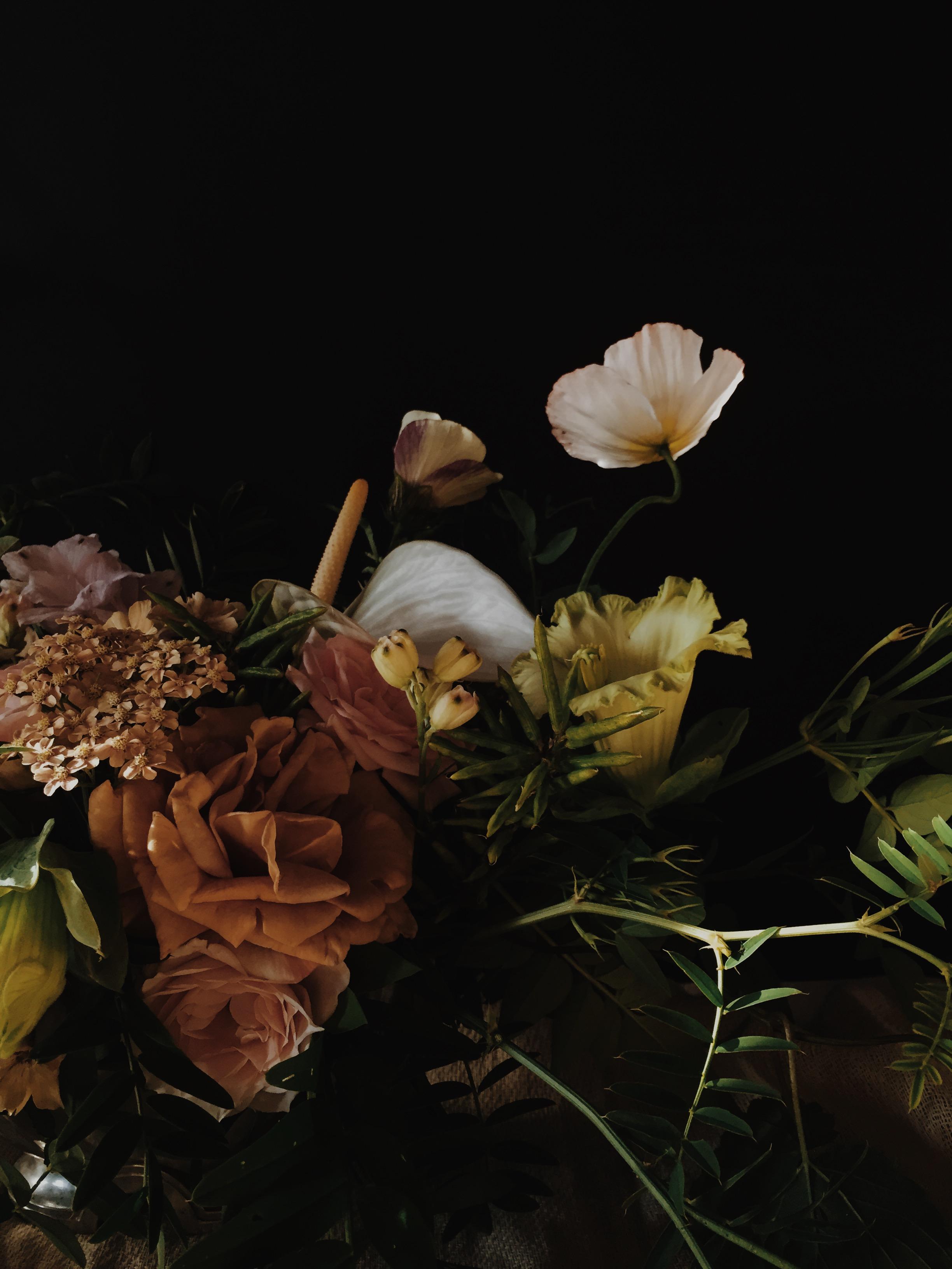 Vervain moody summer flowers 02
