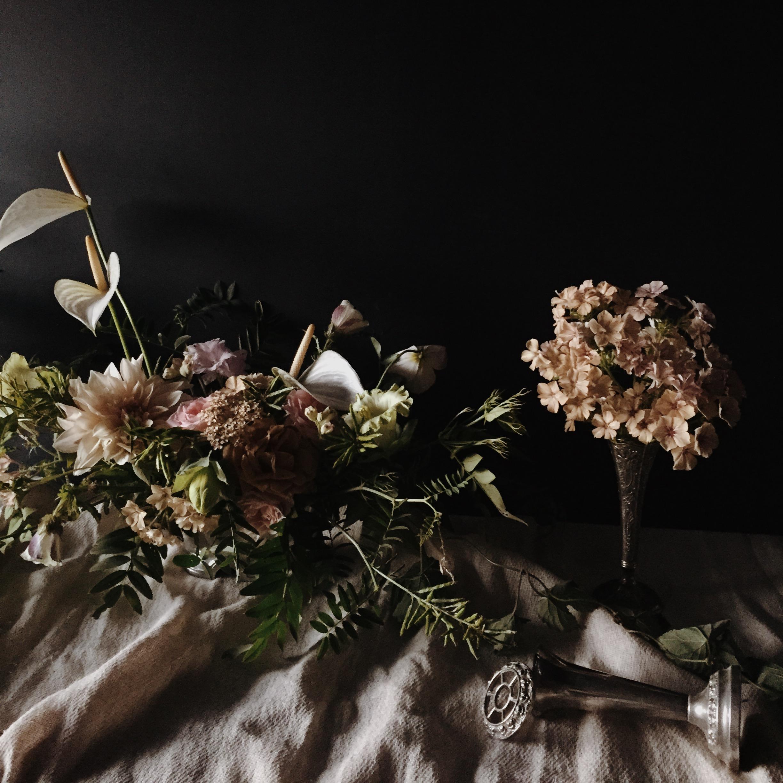 Vervain moody summer flowers 05