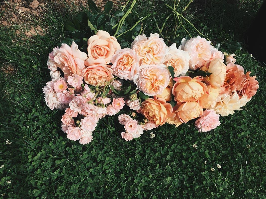 homegrown bridal roses