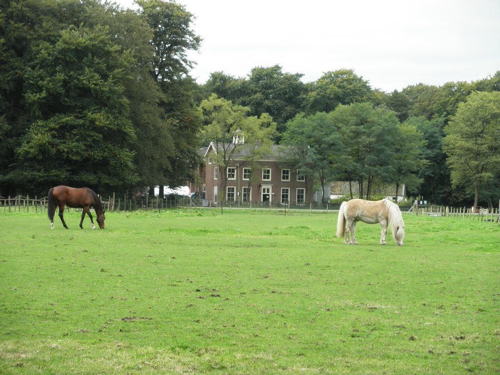 The Beauforhuis - 'Paradiso of the forest'