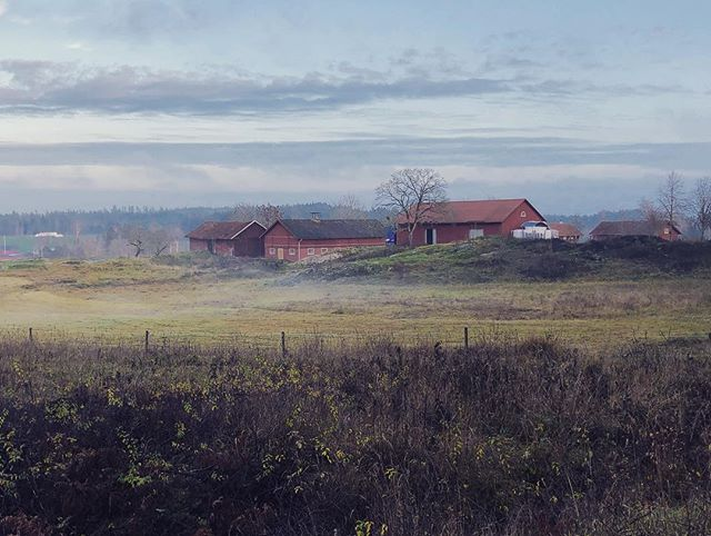 Sörmland - #countryside #södermanland #sörmland #sweden #swedish #landscape #nordic #light #nordiclight #scandinavia #barn #house #landet #lada #hus #falurödfärg