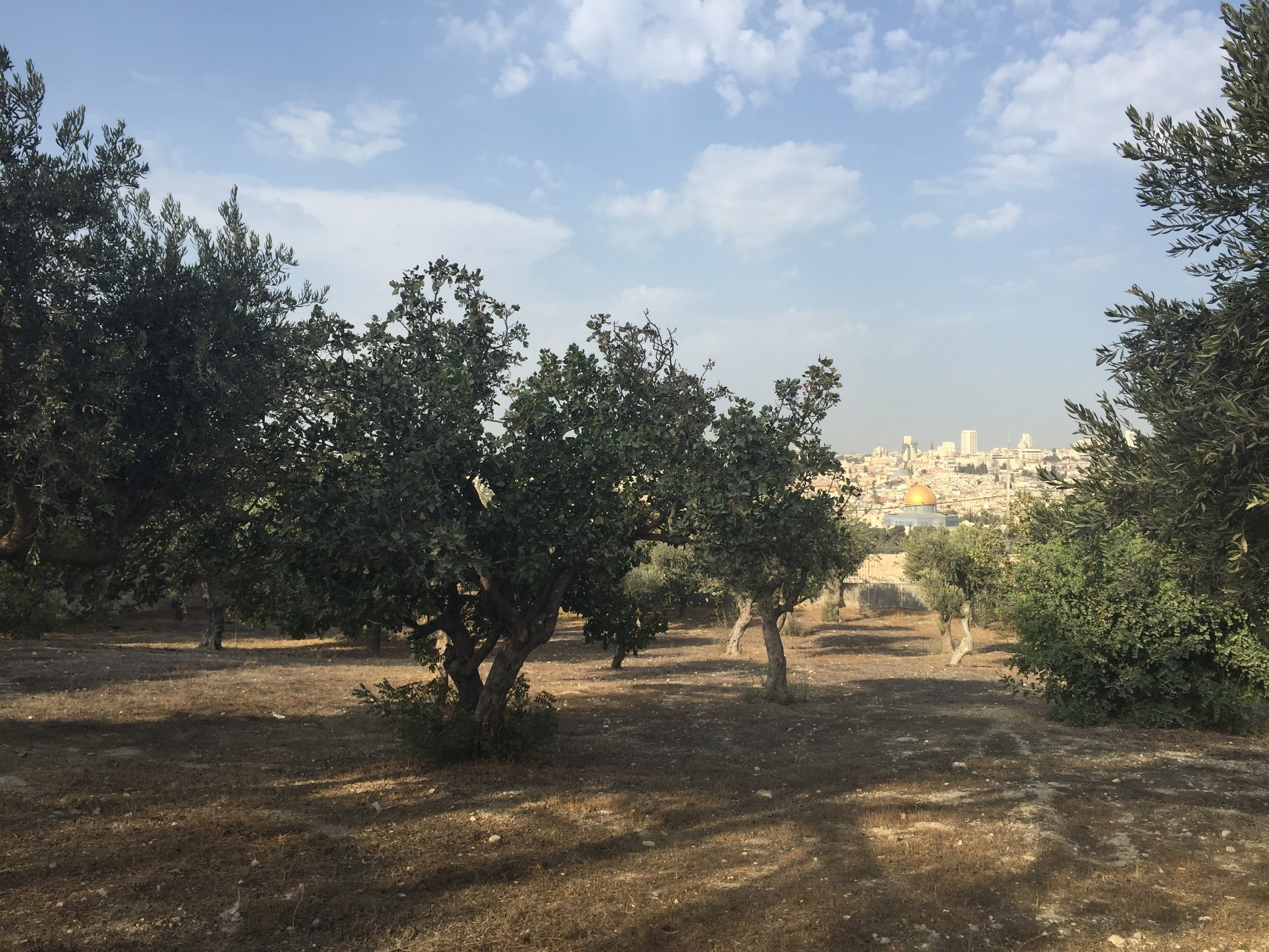 Looking down at the temple mount through a grove of Olive trees in a garden at the Pater Noster Church on the Mount of Olives.  This building memorialies Jesus teaching his disciples how to pray.