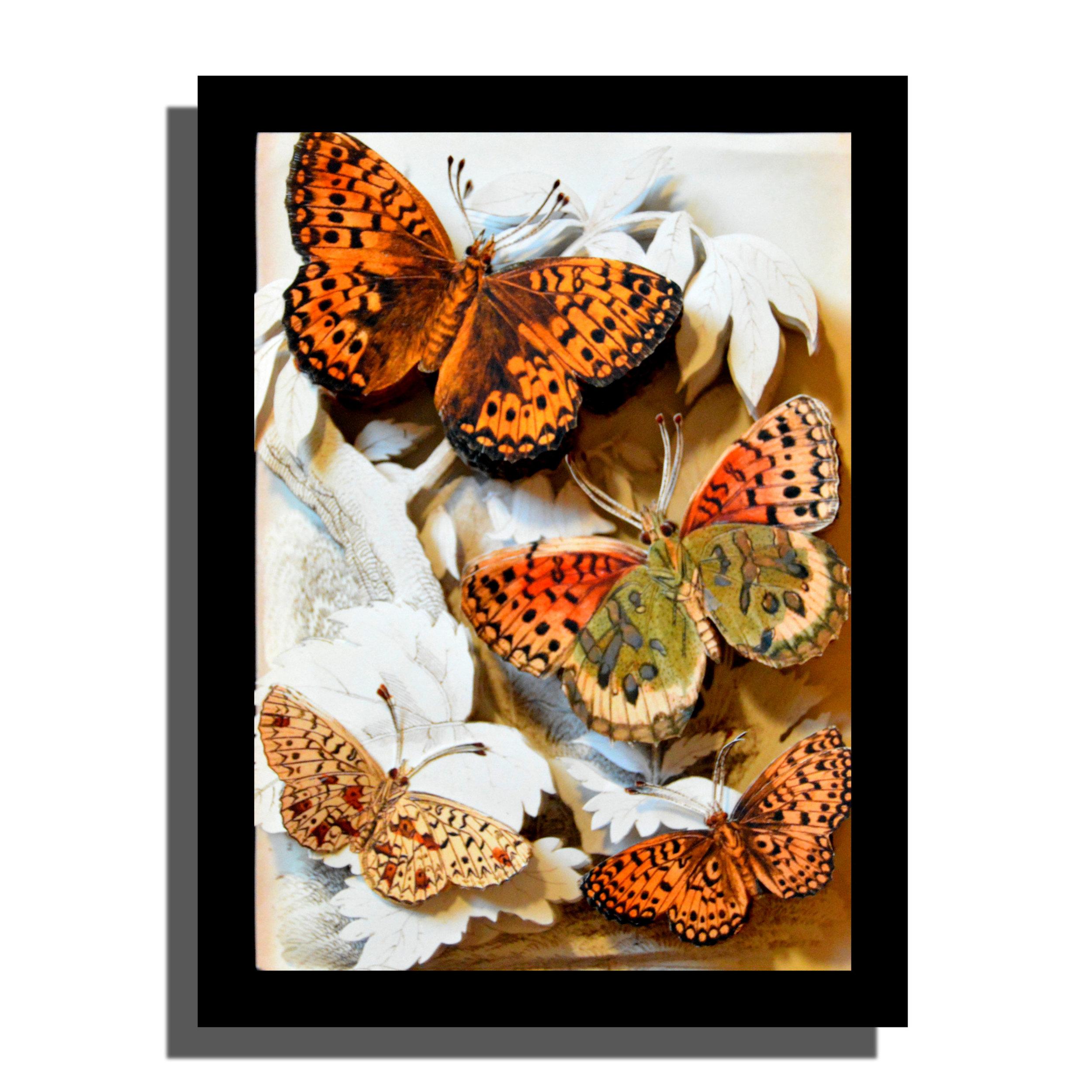 ButterflyStudy1b.jpg