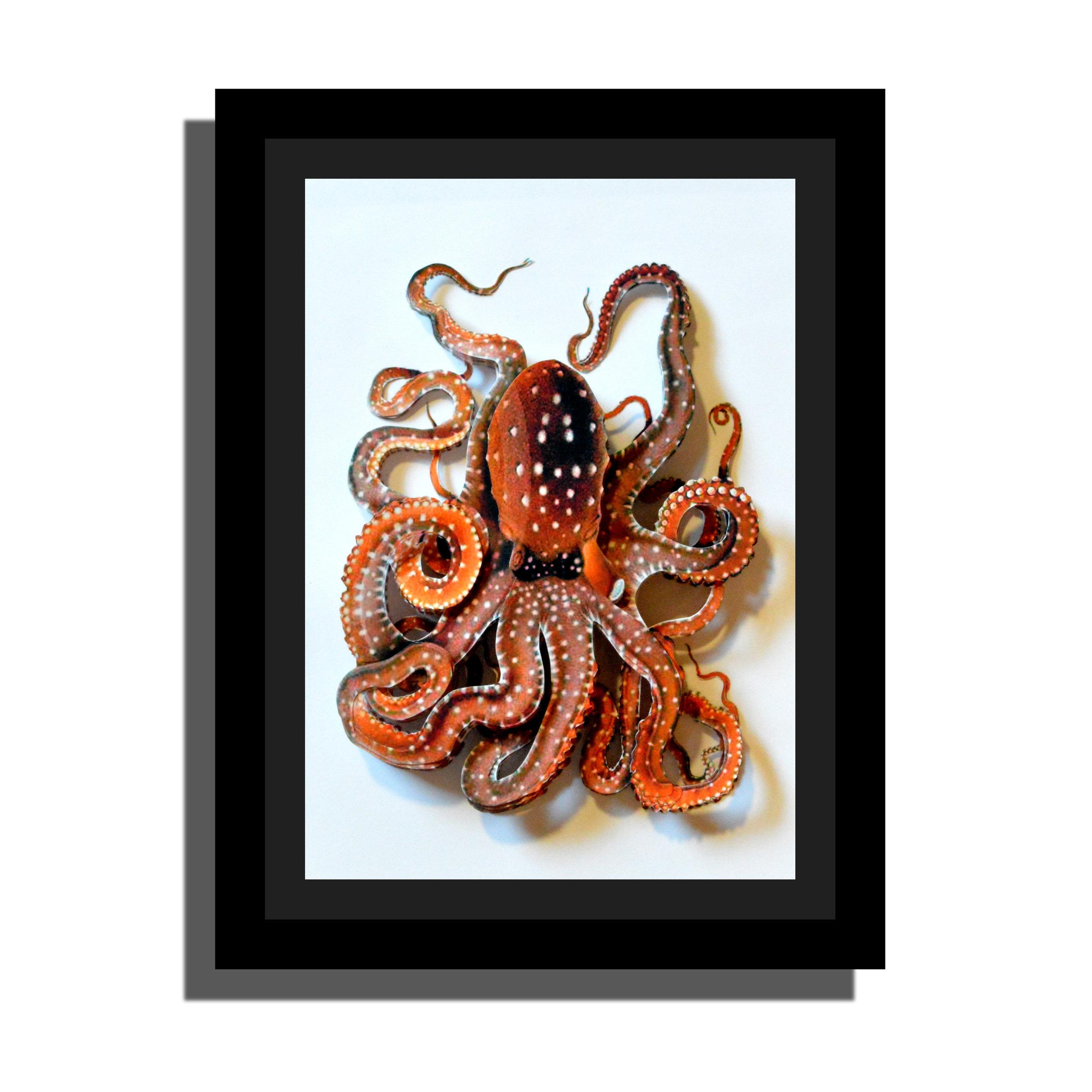 Octopus1a.jpg