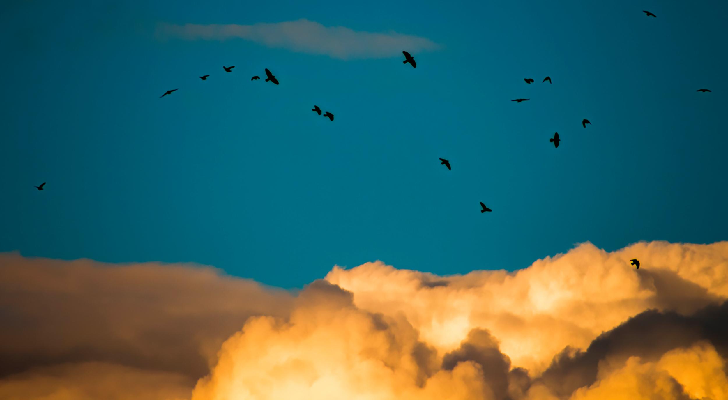Peter Leddy Birds