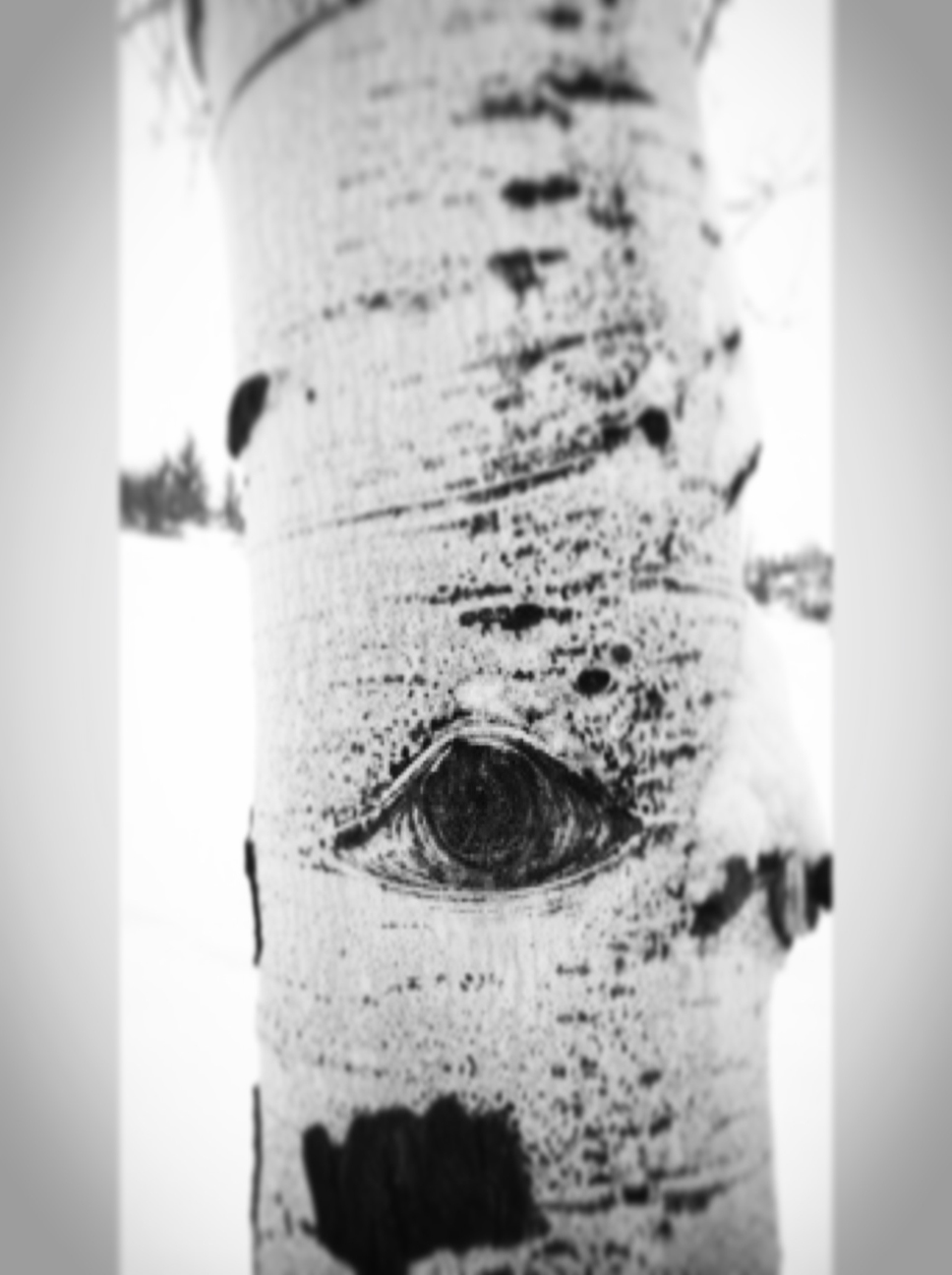 vail_eye.jpg