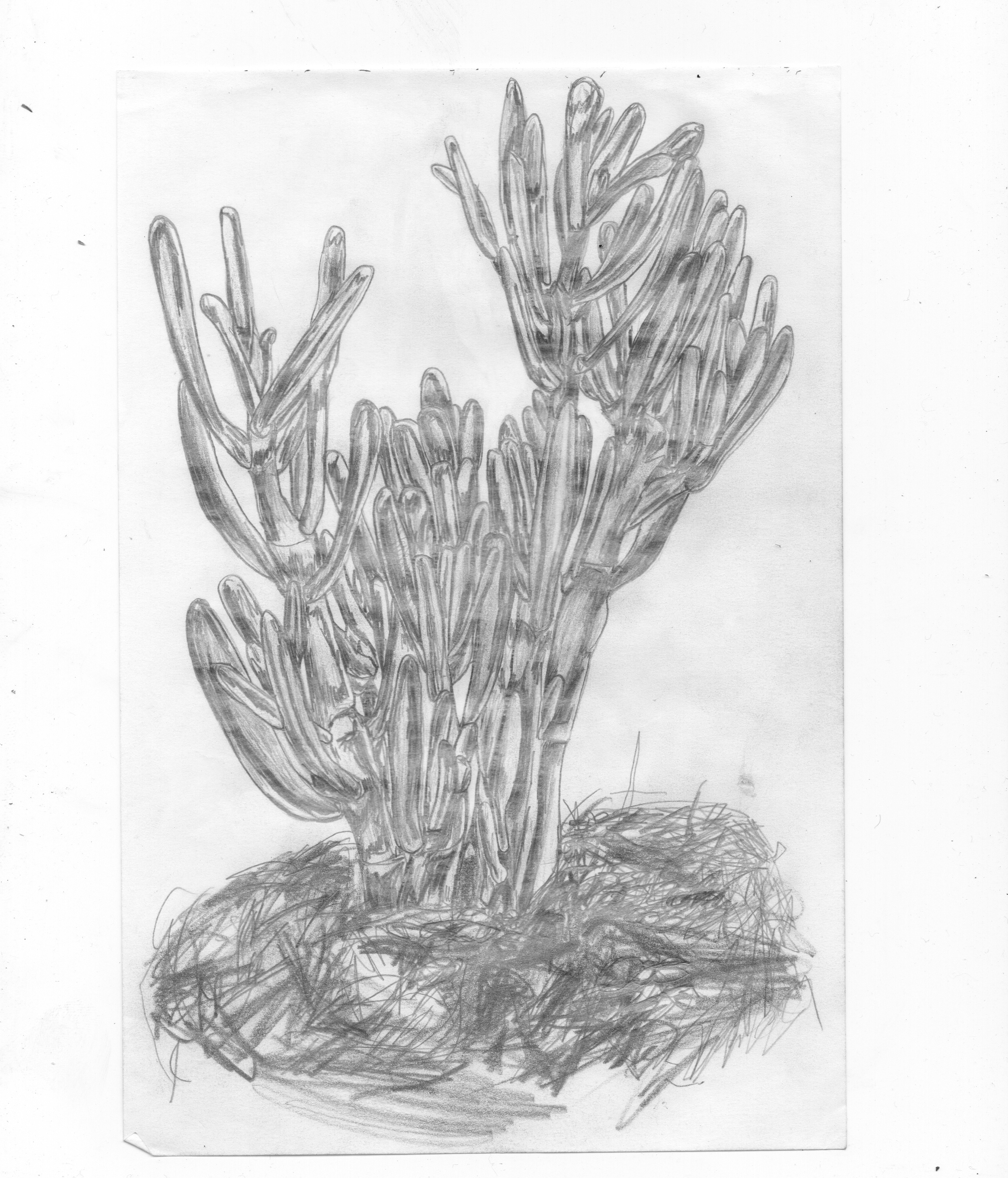 CACTUS PENCIL.jpg