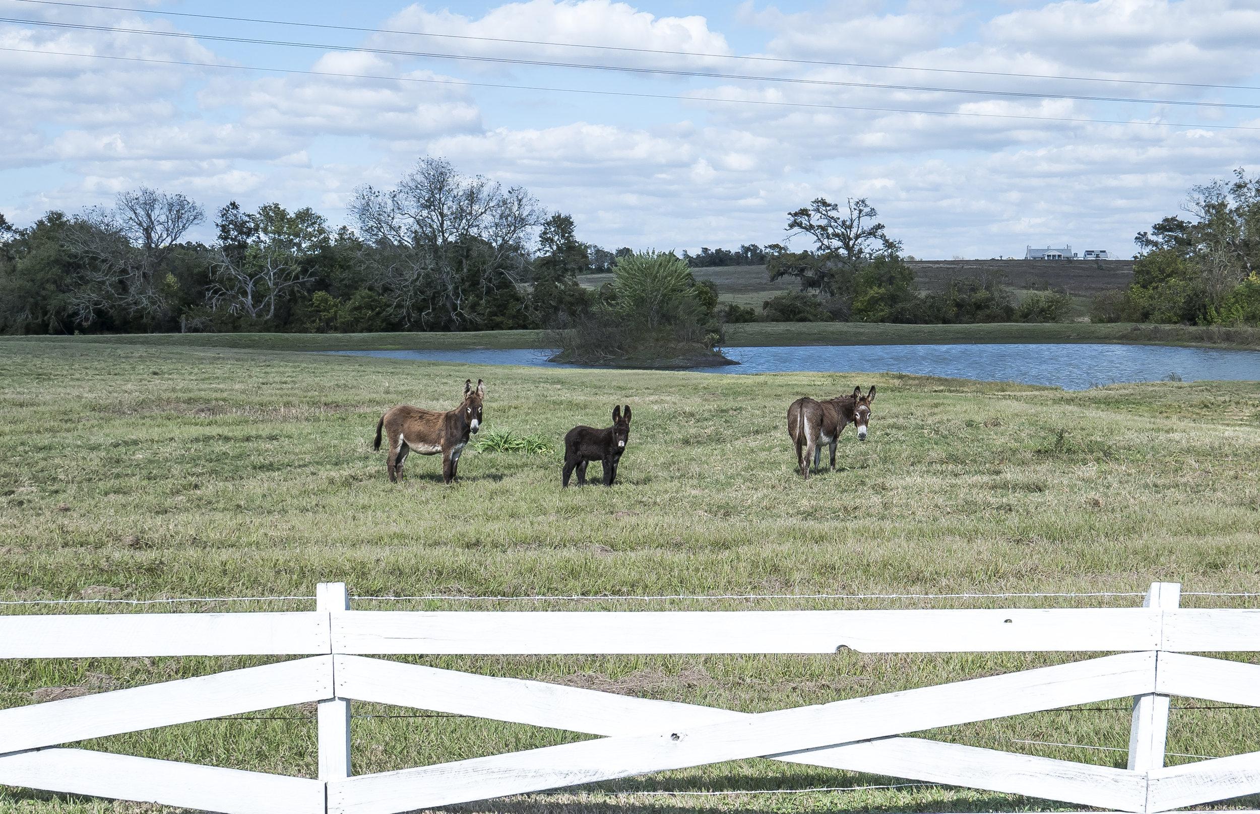 JWP_Texas-1050177.jpg