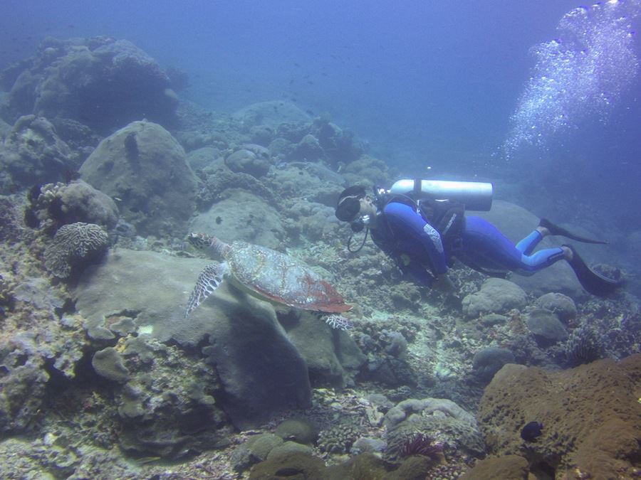 Diving with a turtle.jpg