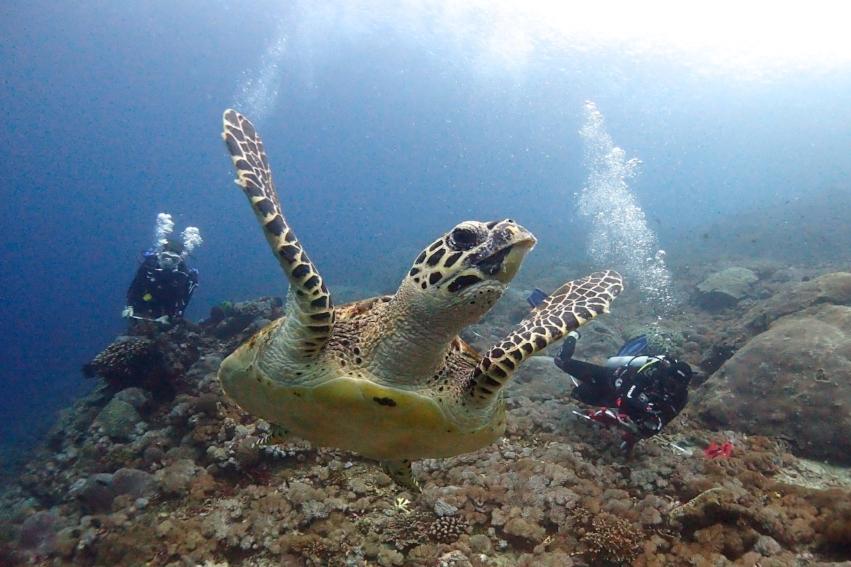 Turtle Survey - Marine Biology Bali
