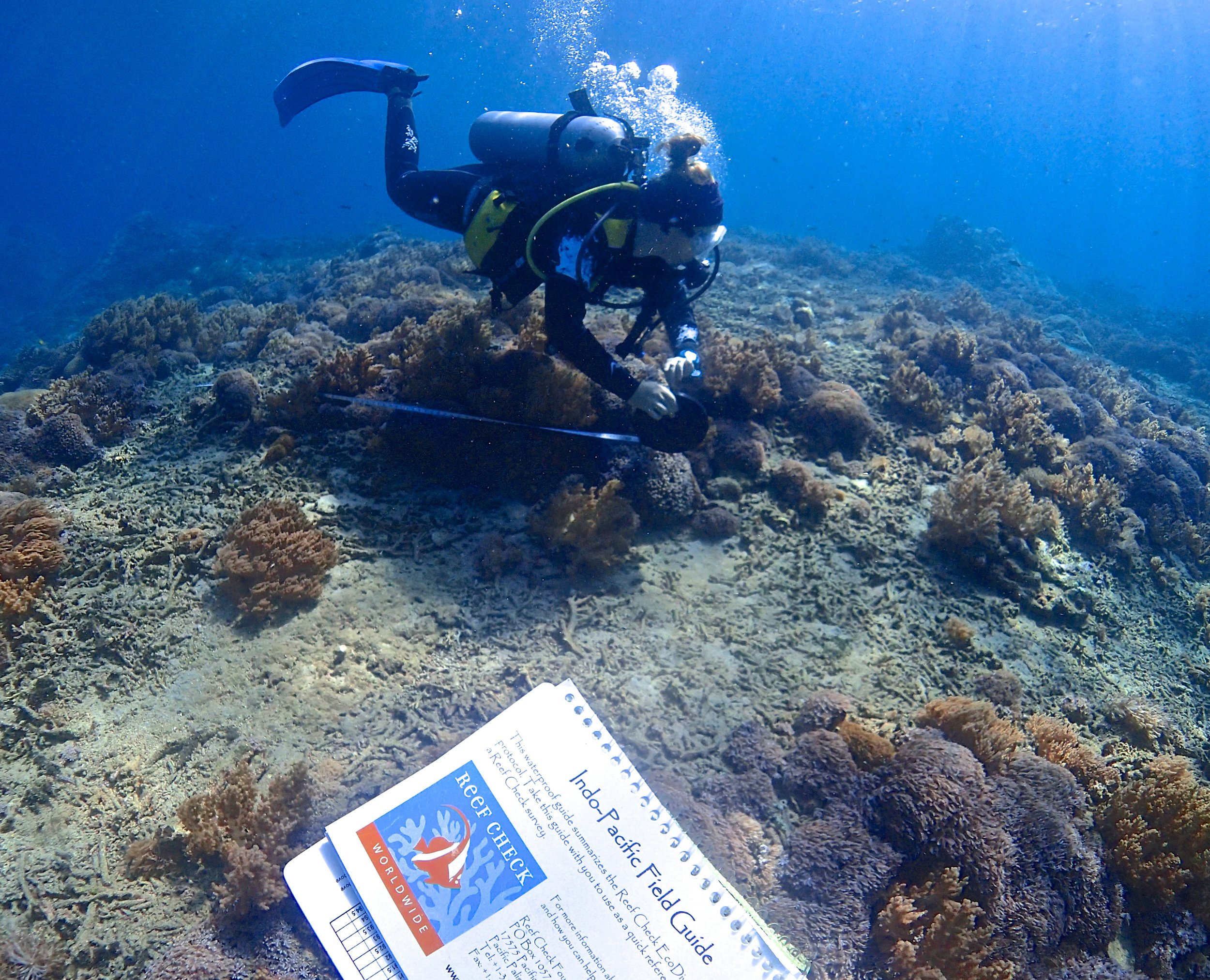 Reef check surveys in bali