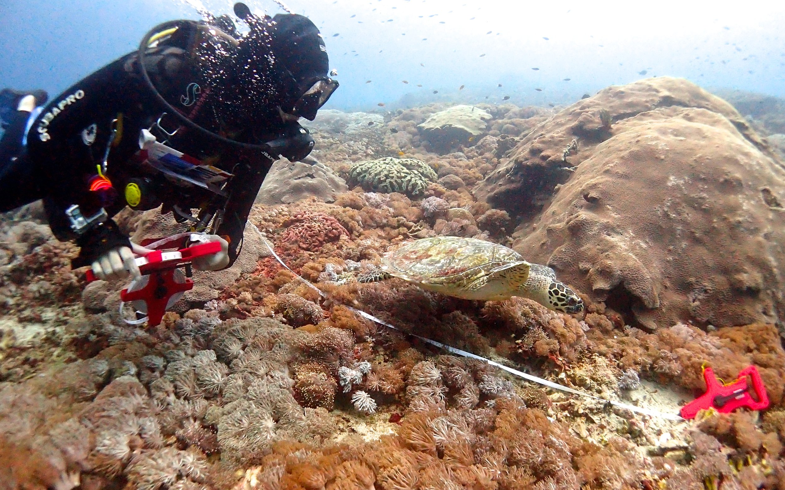 Coral reef monitoring bali