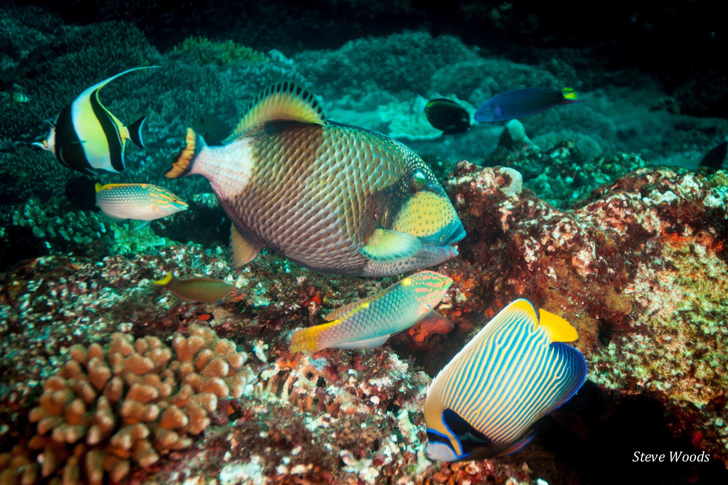 Indonesian reef fish