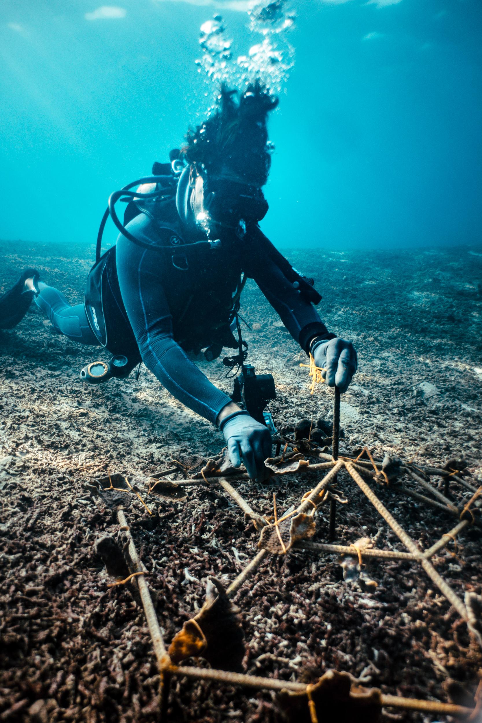 Andrew Taylor transplanting coral