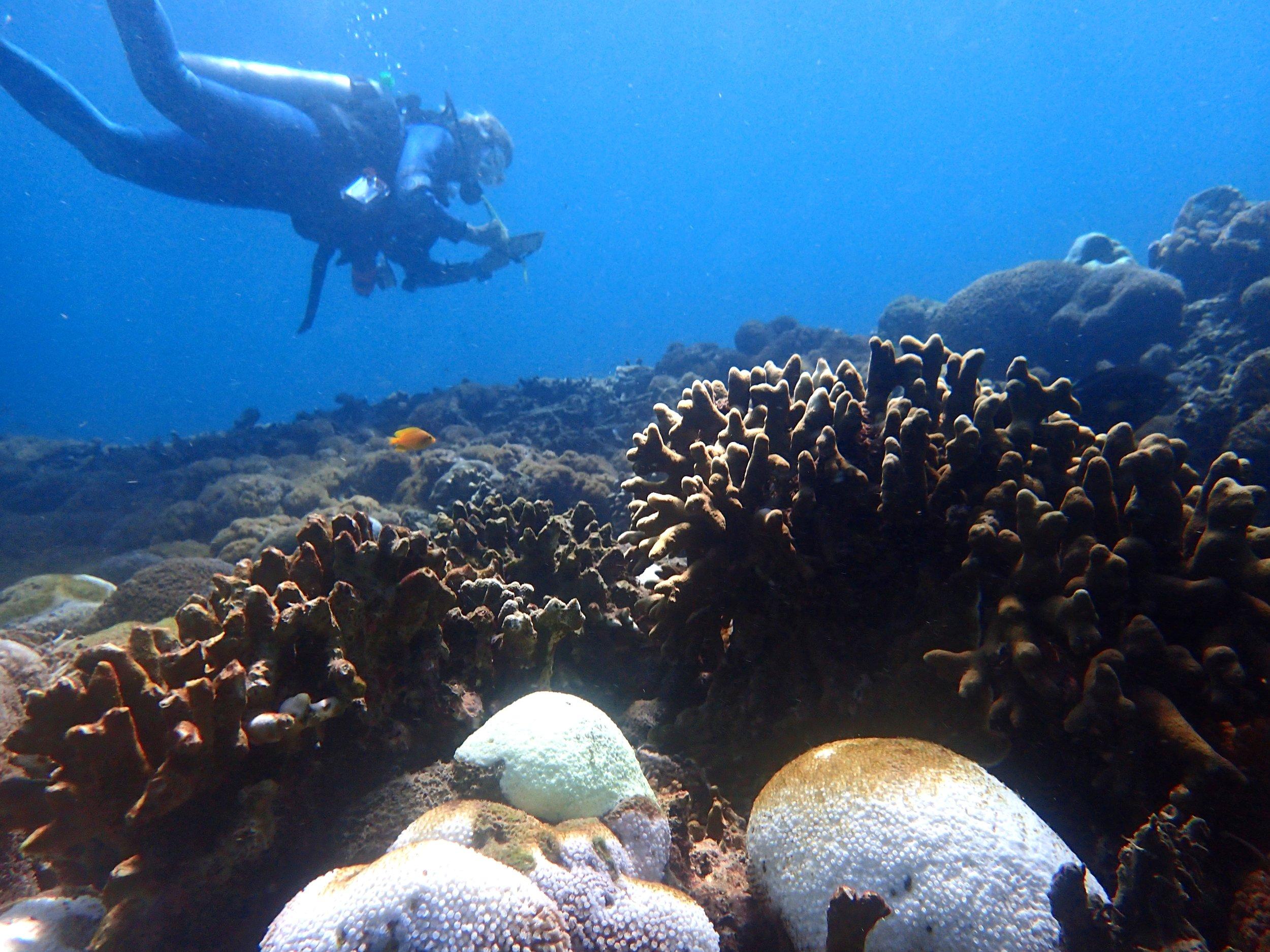 coral bleaching survey