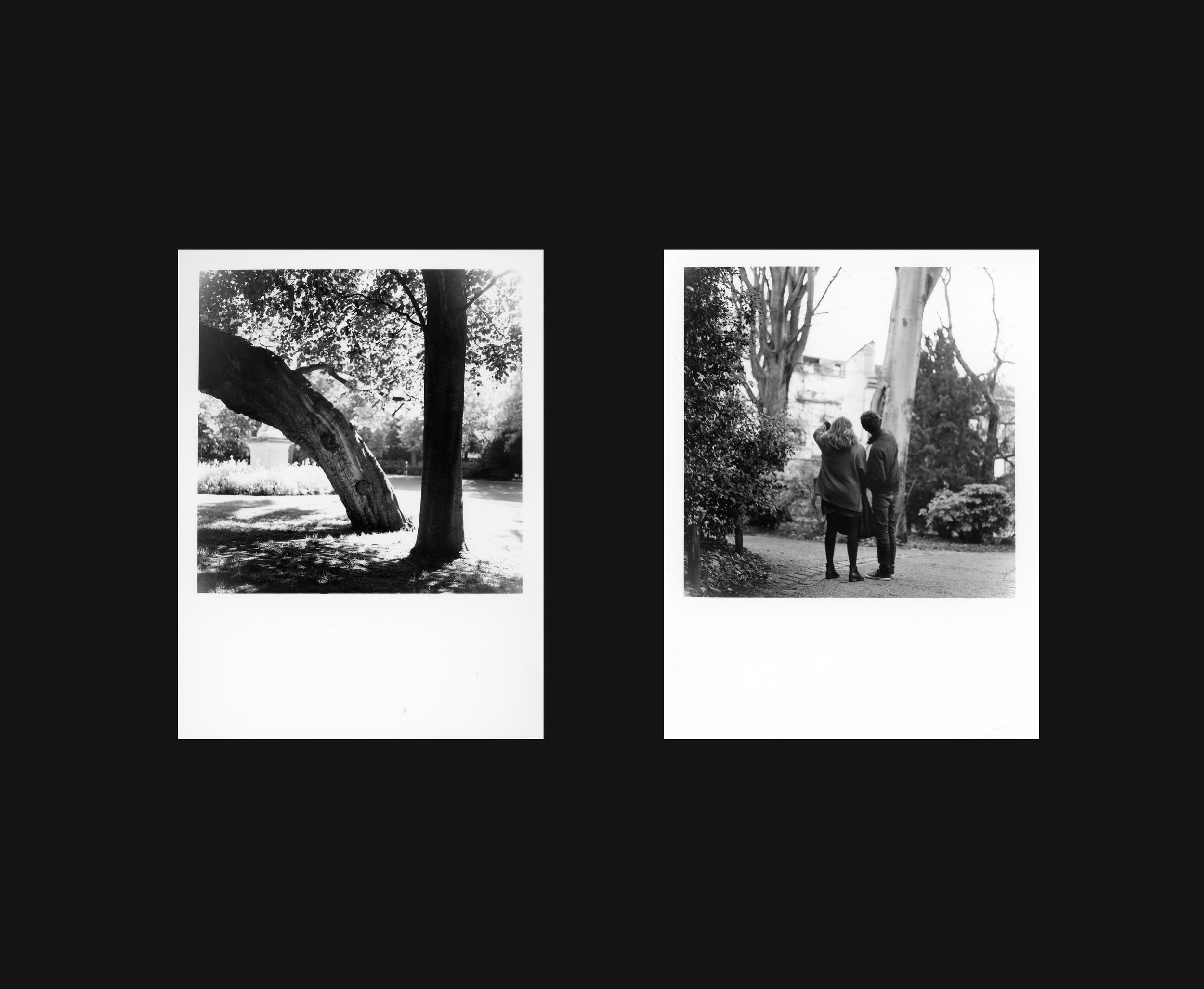 album31.jpg