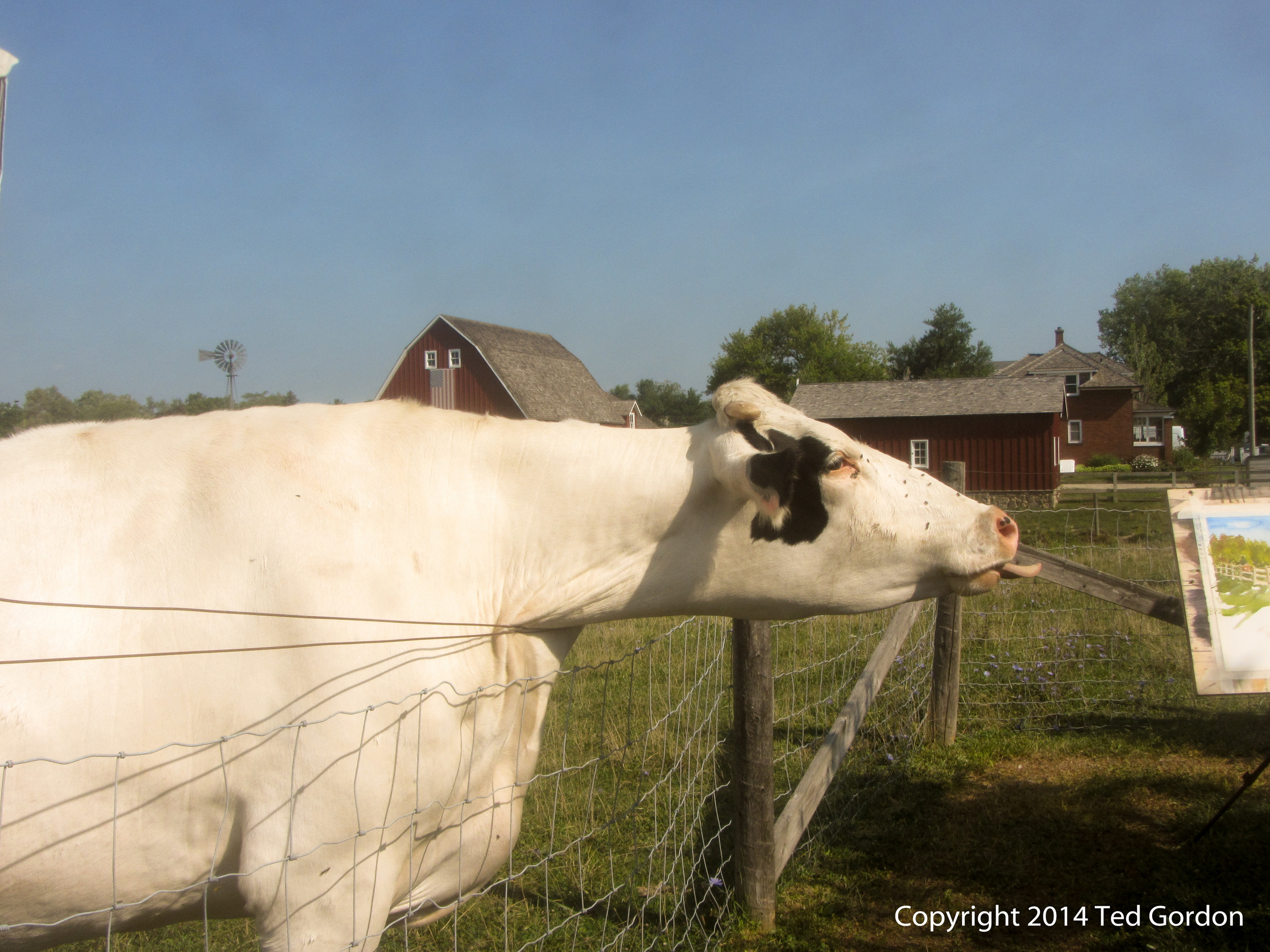 It's fun to meet people while painting plein air. This time we met a cow, who apparently had an appetite for art.